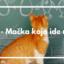 mačka koja ide u školu