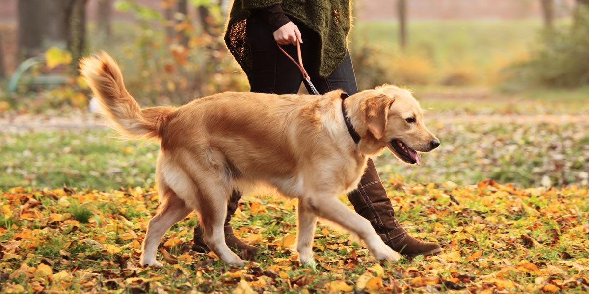 šetanje-psa