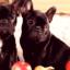 5 namirnica koje psi ne bi smeli da jedu